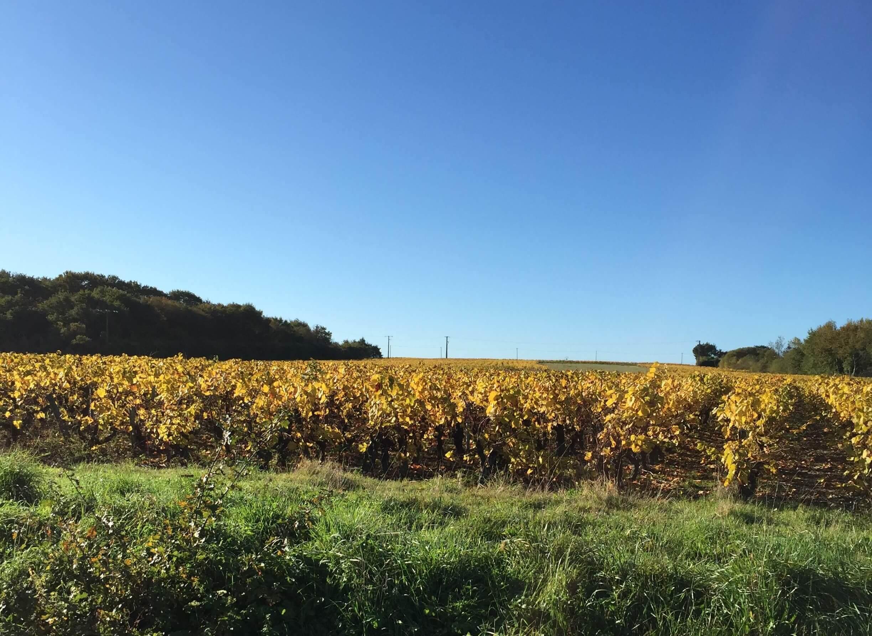 Vignoble Nantais pendant l'automne