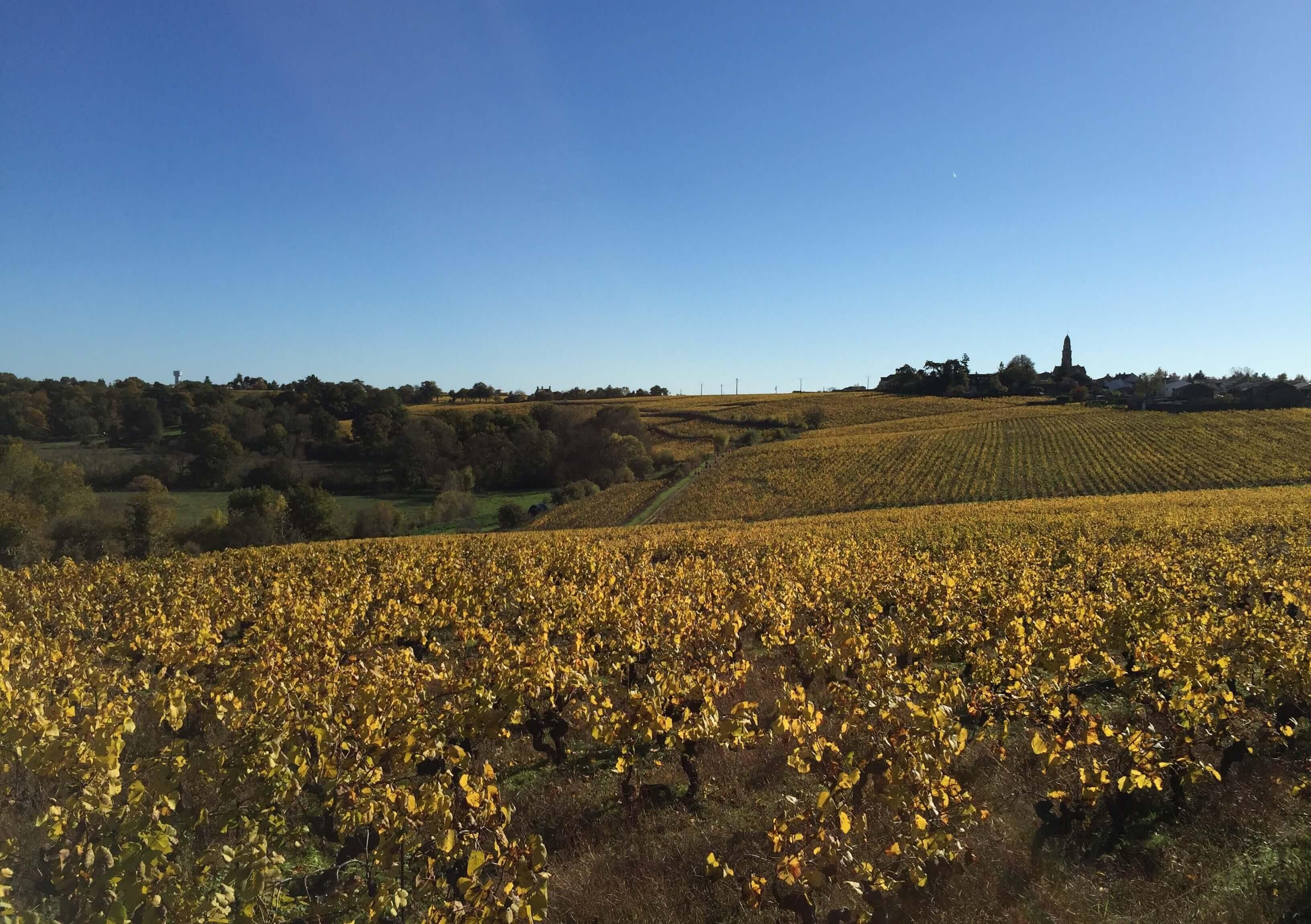 Vue sur le vignoble Nantais en Automne