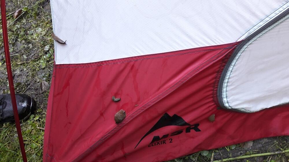 tente et limaces