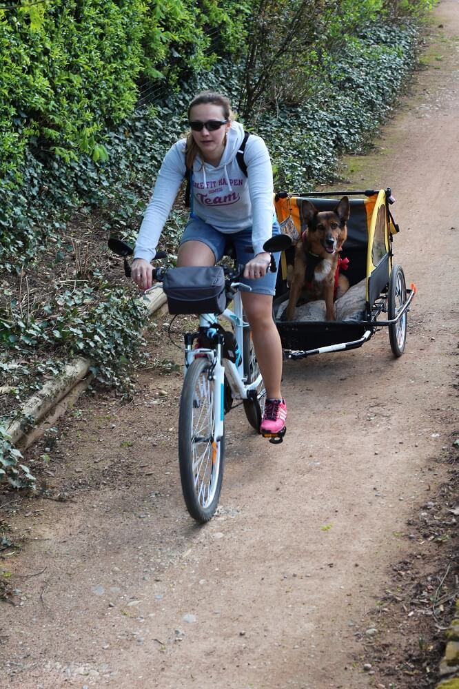 transport chien dans son vélo