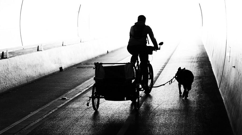 un chien et un vélo